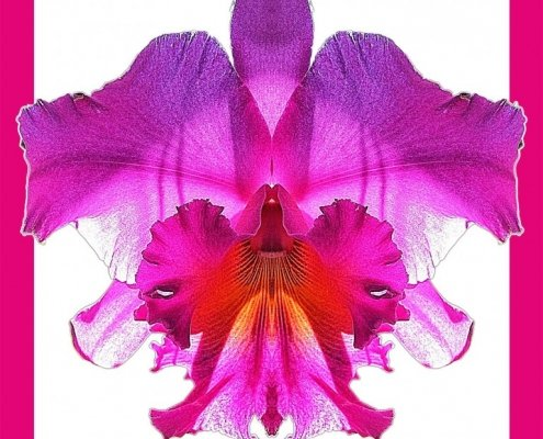 Orchid 11 bis framed Alessio Cocchi