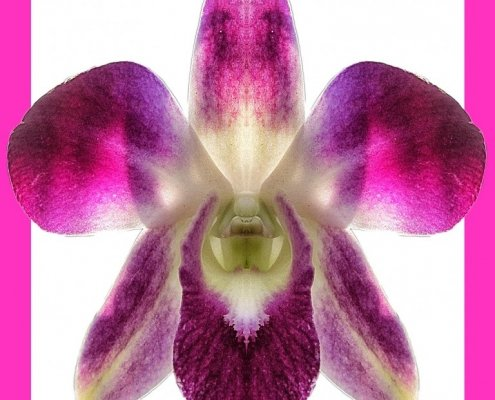 Orchid 5 bis framed Alessio Cocchi