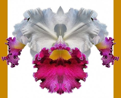 Orchid 9 bis framed Alessio Cocchi